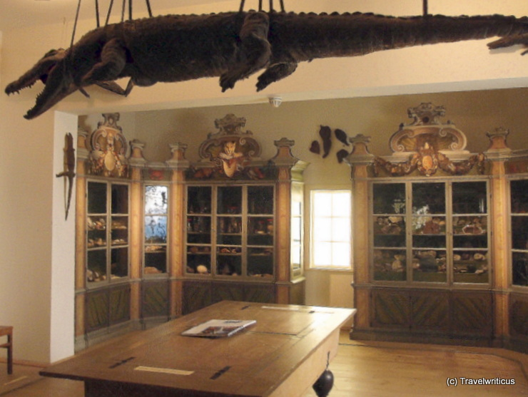Krokodil in der Kunst- und Naturalienkammer der Frankeschen Stiftungen in Halle (Salle), Deutschland